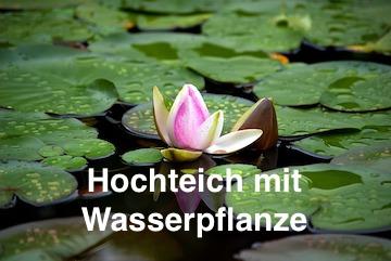Hochteich mit Wasserpflanze