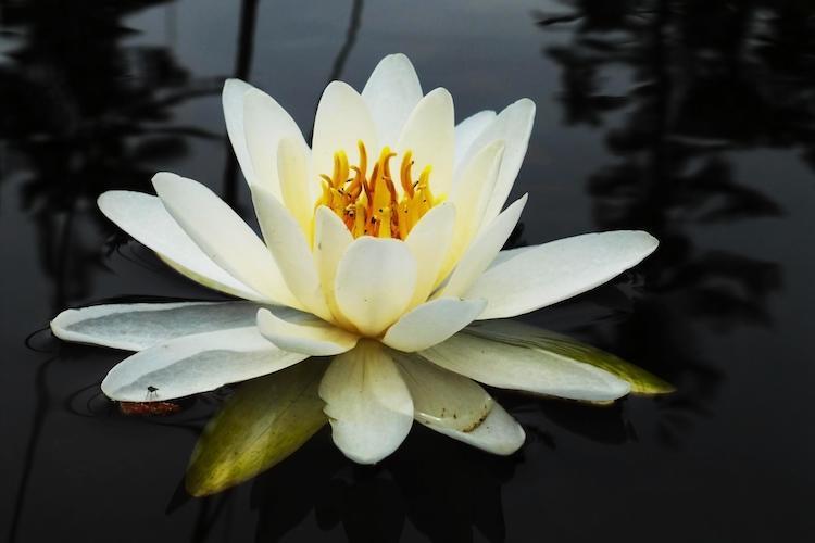 Pflanze auf Teich