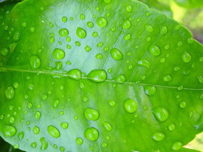 Wasser auf Pflanzenblatt