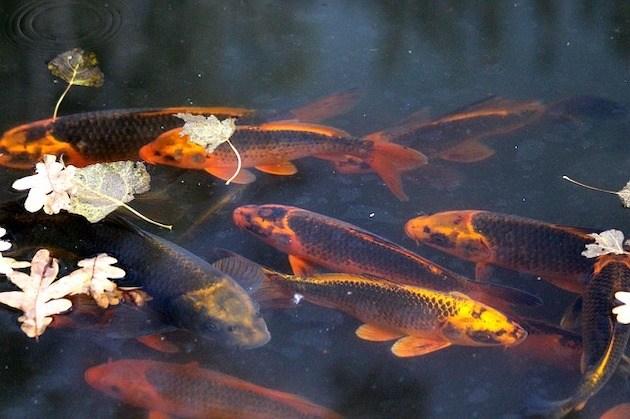 Laub auf dem Teich